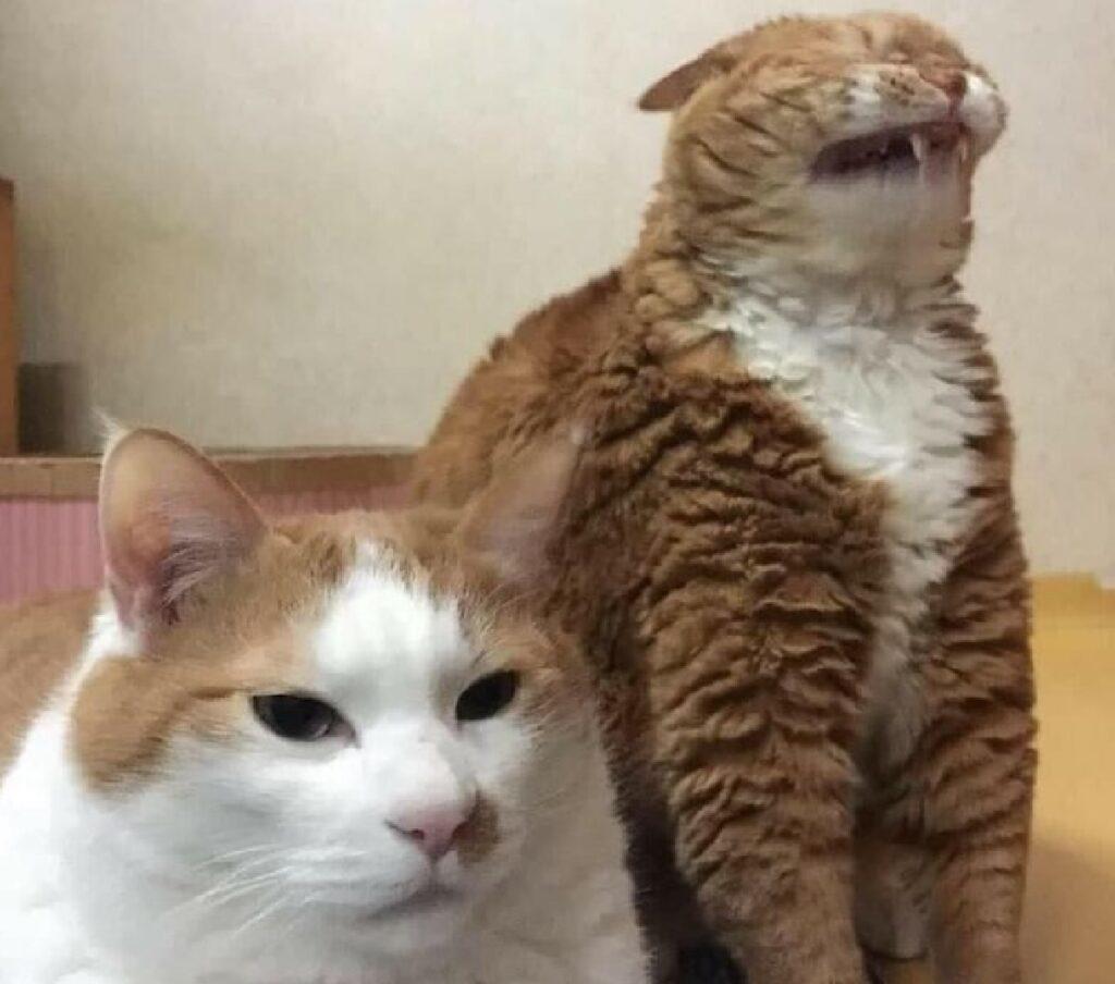 gatto con amico simpatico