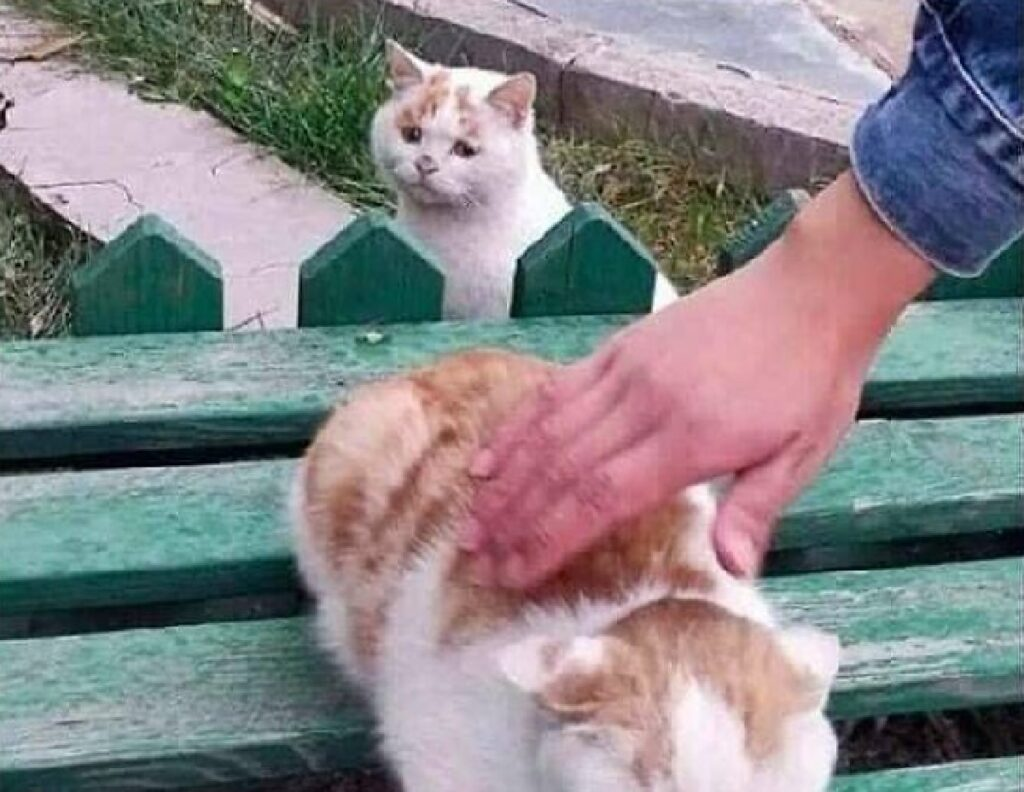 gatto accarezzato da mano
