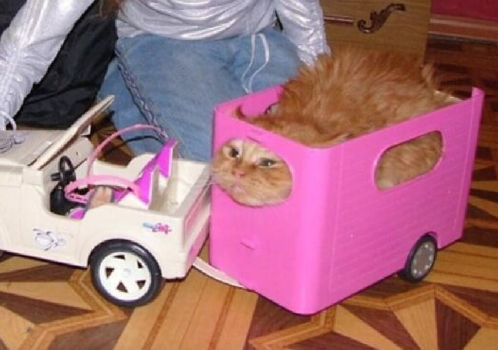 gatto dentro rimorchio rosa