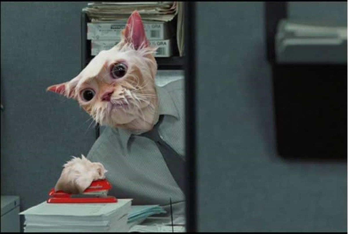 gatto scrivania