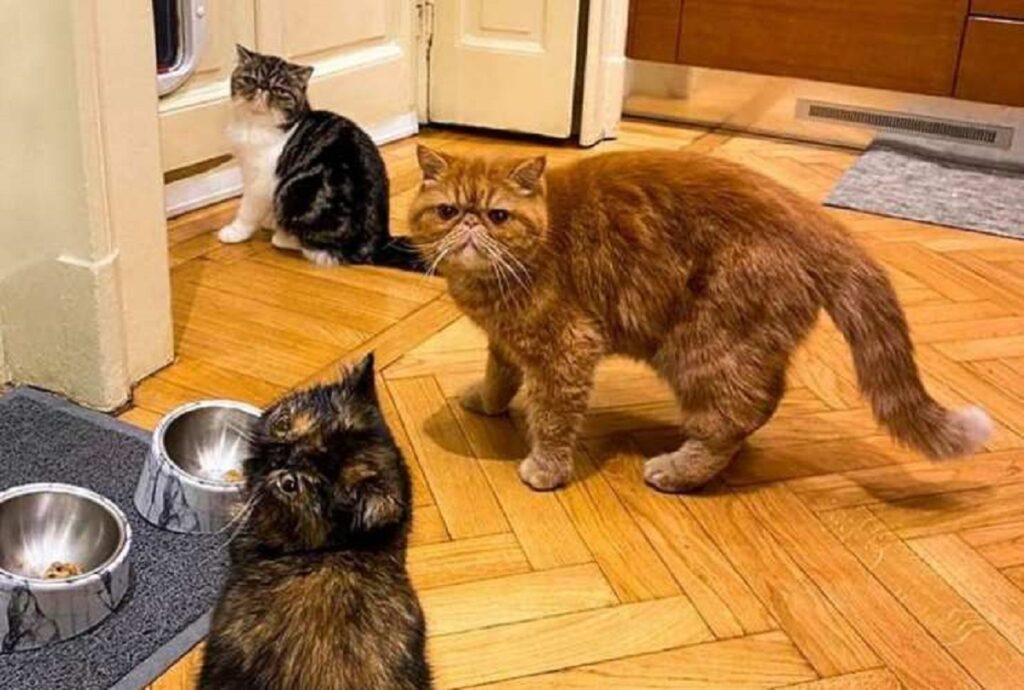 gatti di alessandro borghese