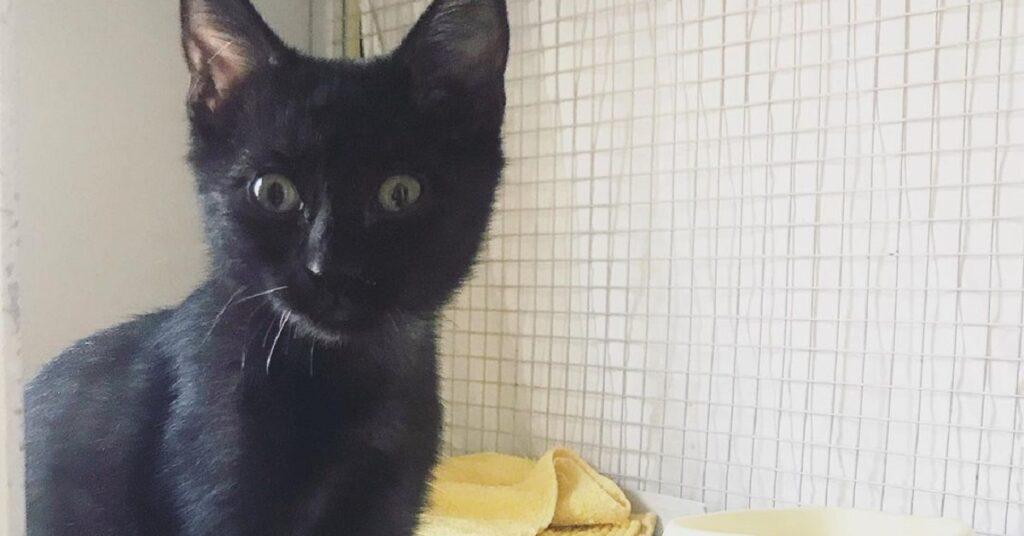 gattina nella sua gabbia