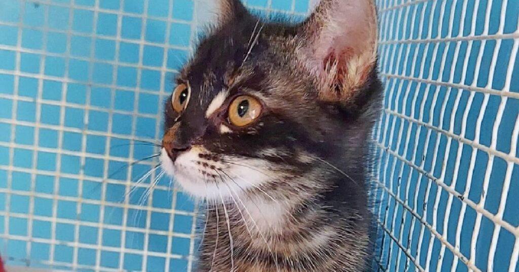gattina nel gattile di Treviso