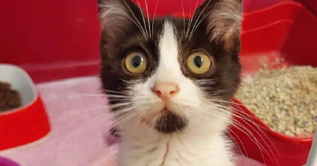 gattina con una macchiolina sul mento