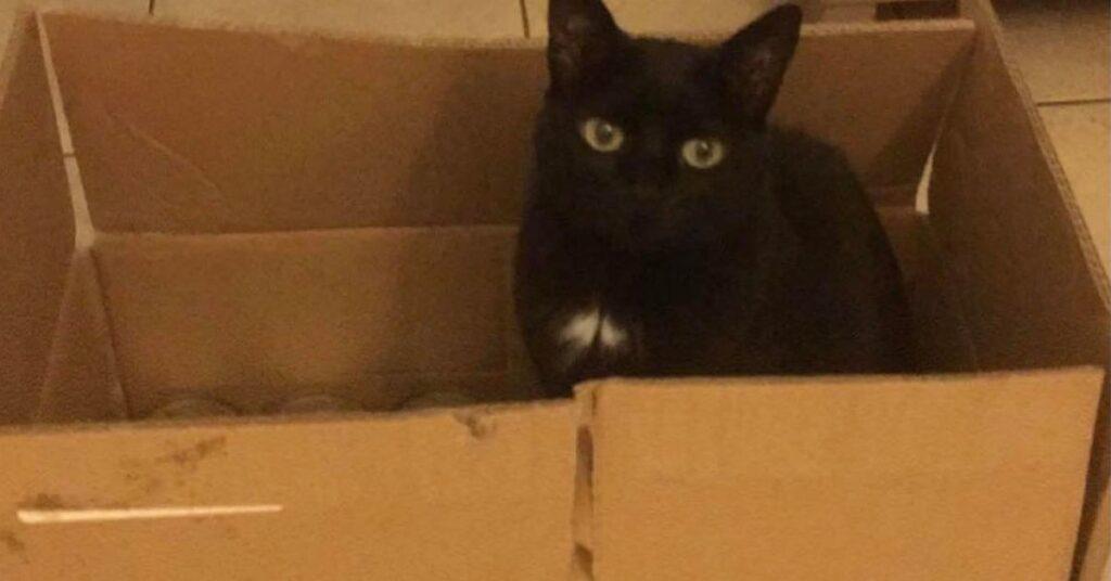 gatta nera in una scatola