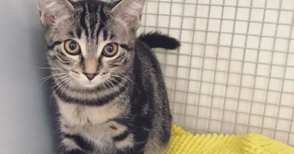 gattino in una gabbia con la coperta gialla