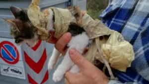 gattina nastro adesivo