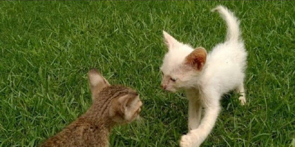 gattino abbandonato inizia una nuova vita