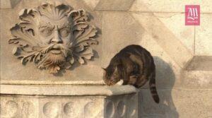gatto beve alla fontana