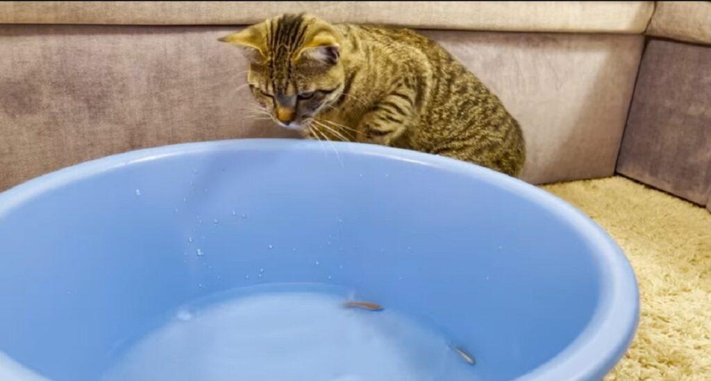 gatto sammy e pesciolini