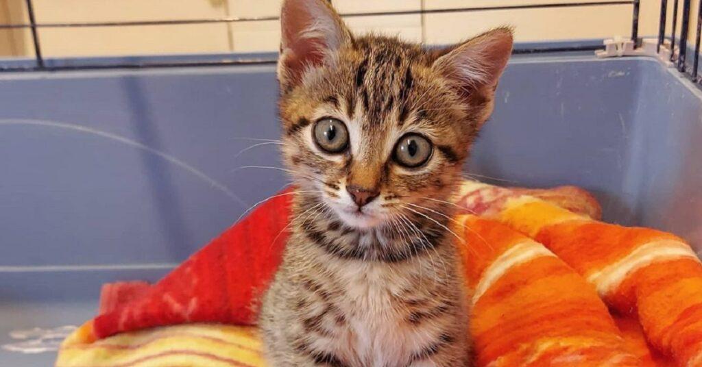 gattina nella sua gabbietta