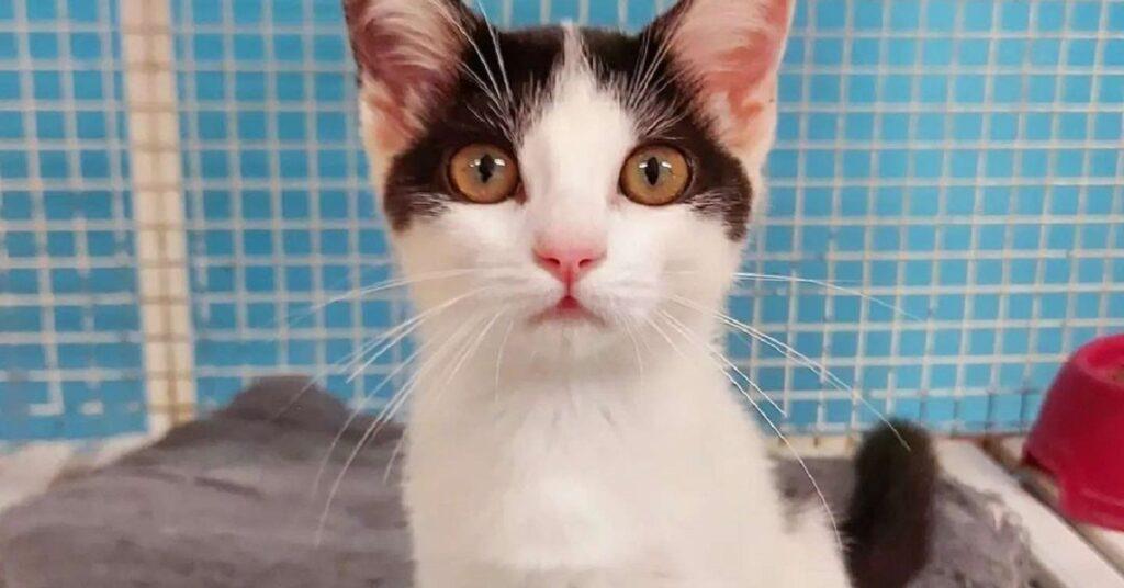 gattina nella sua gabbia a Treviso