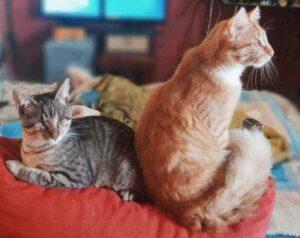 gatti ciechi