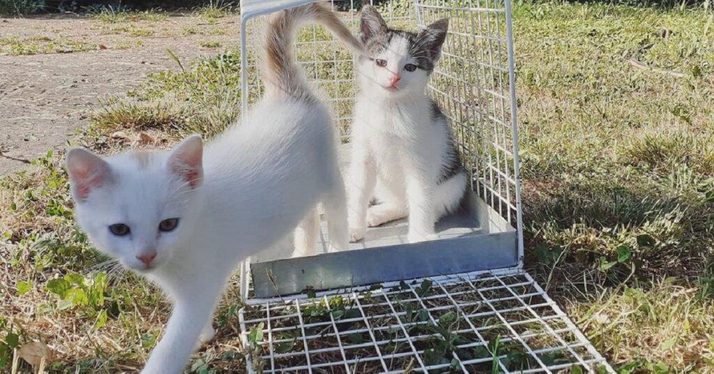 gattini in un prato