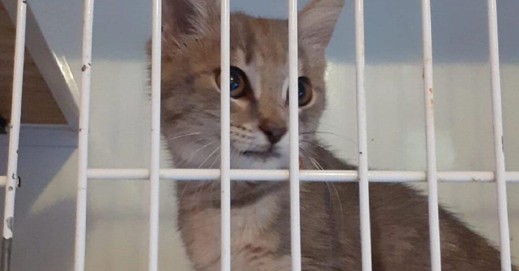 gattina dietro le sbarre