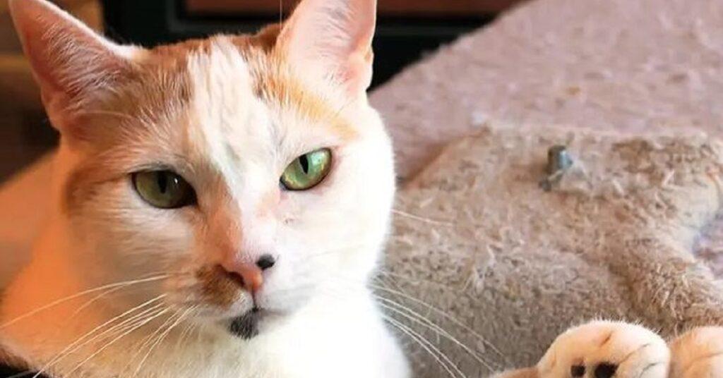 micia dagli occhi verdi