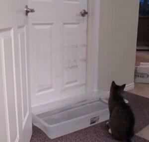 gatto apre porta