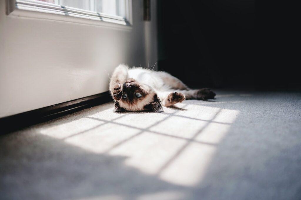 gattino davanti alla finestra