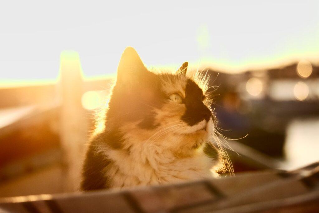 gattino al tramonto