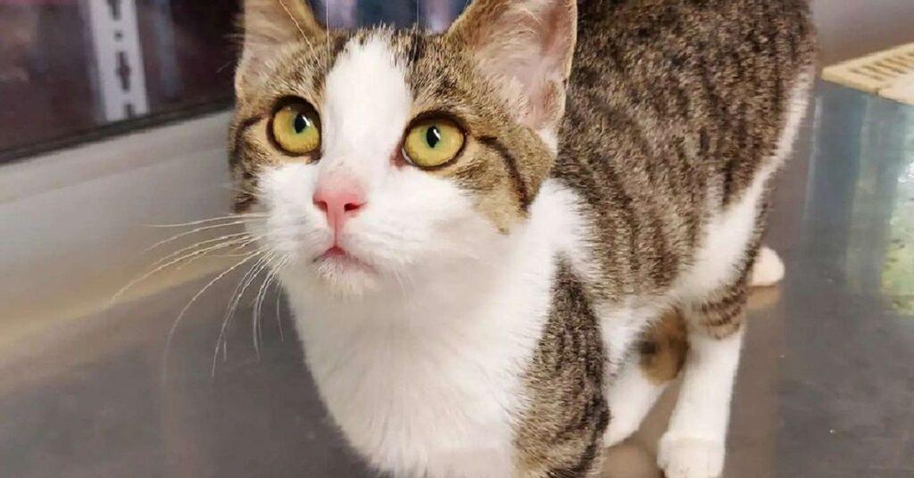 gattina dagli occhi gialli