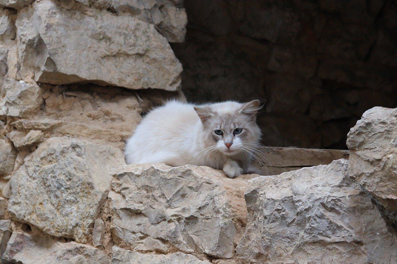 gatto con sguardo preoccupato