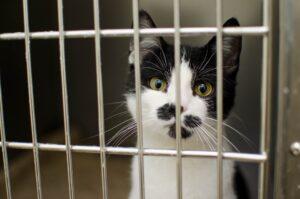 gattino nella gabbietta