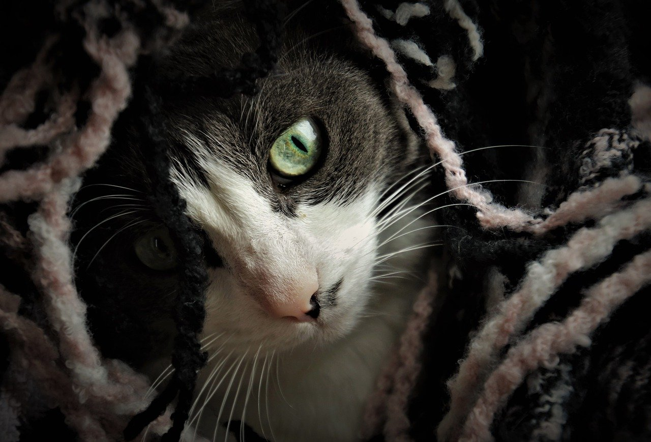 felino con occhi profondi