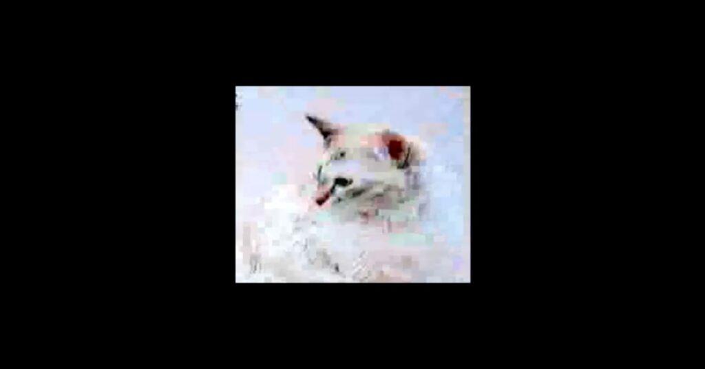 gatta bianca immagine