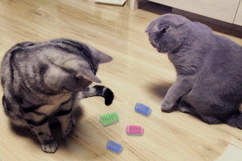 gatti che giocano con le molle