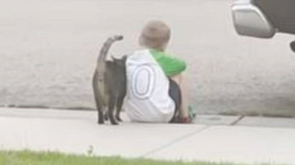 adorabile gatto consola bambino sul marciapiede