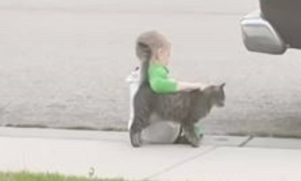 adorabile gatto consola bimbo