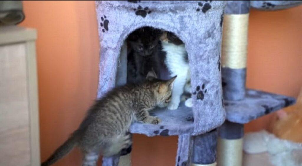 adorabili gattini vedono un nuovo gioco