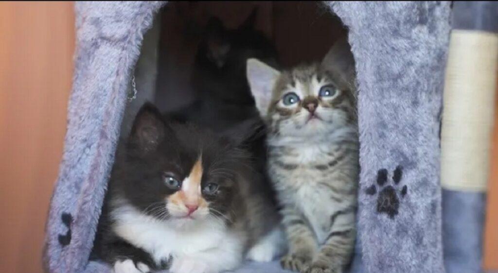 adorabili gattini e tiragraffi