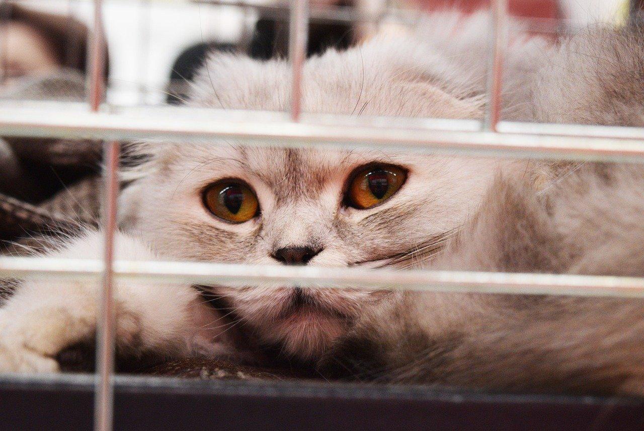 gatto bloccato nella gabbietta