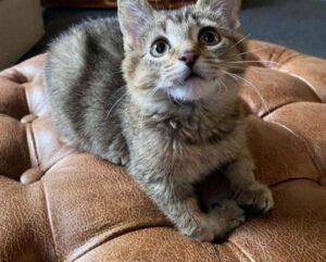 gattino dolce sul divano