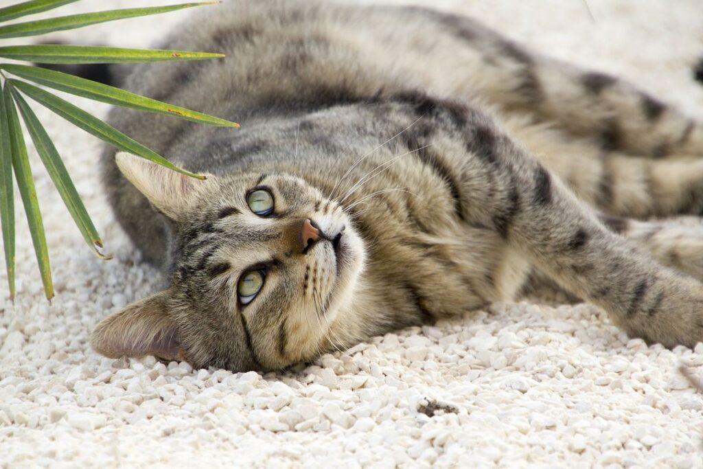 gatto disteso per terra