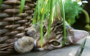 gatto che gioca con una pianta