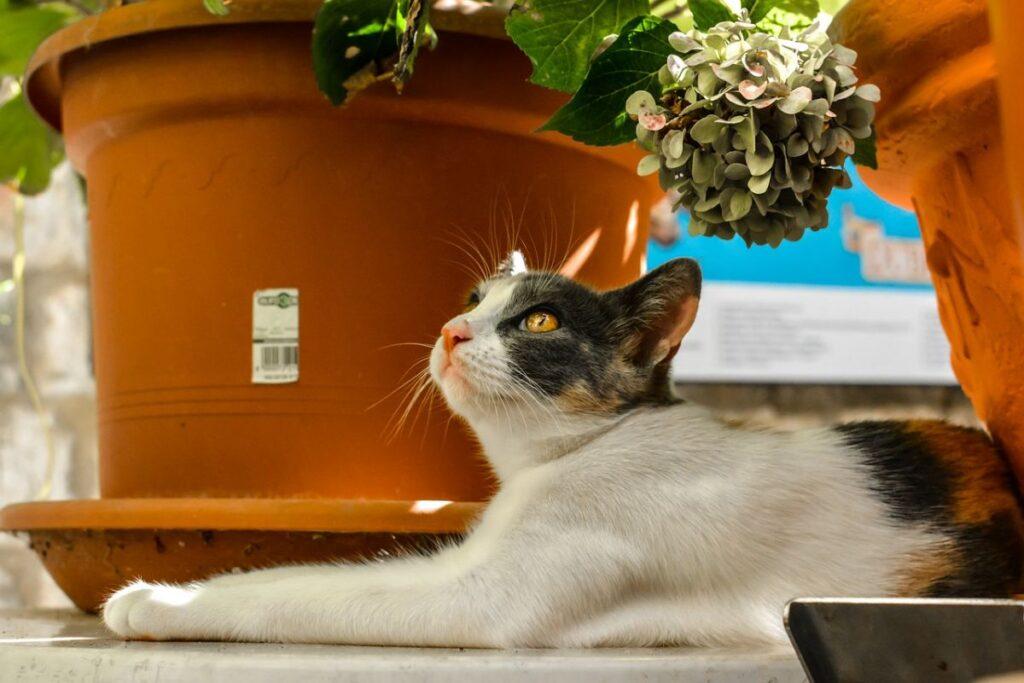 gatto bianco e nero sotto un vaso