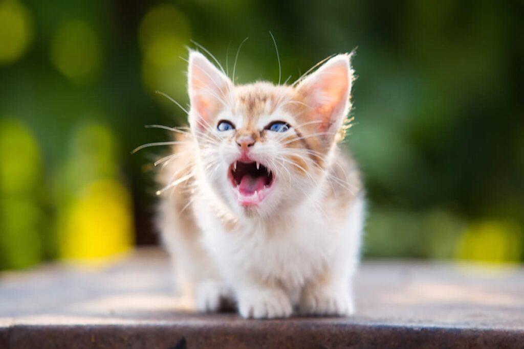 gattino che si difende