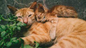 mamma e piccolo dormono