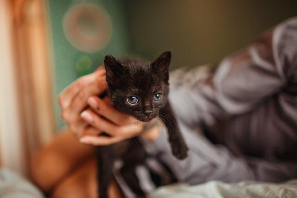 gattino tra le mani