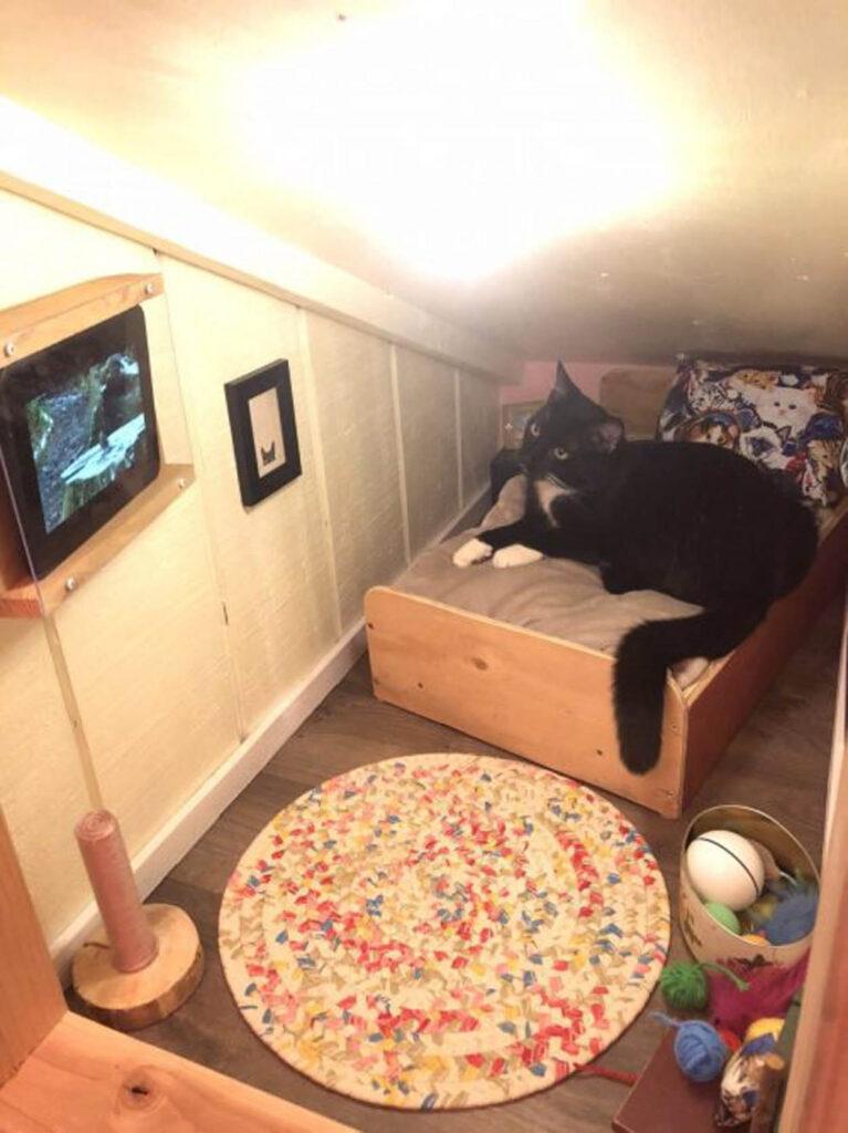 gatto sdraiato in cuccia