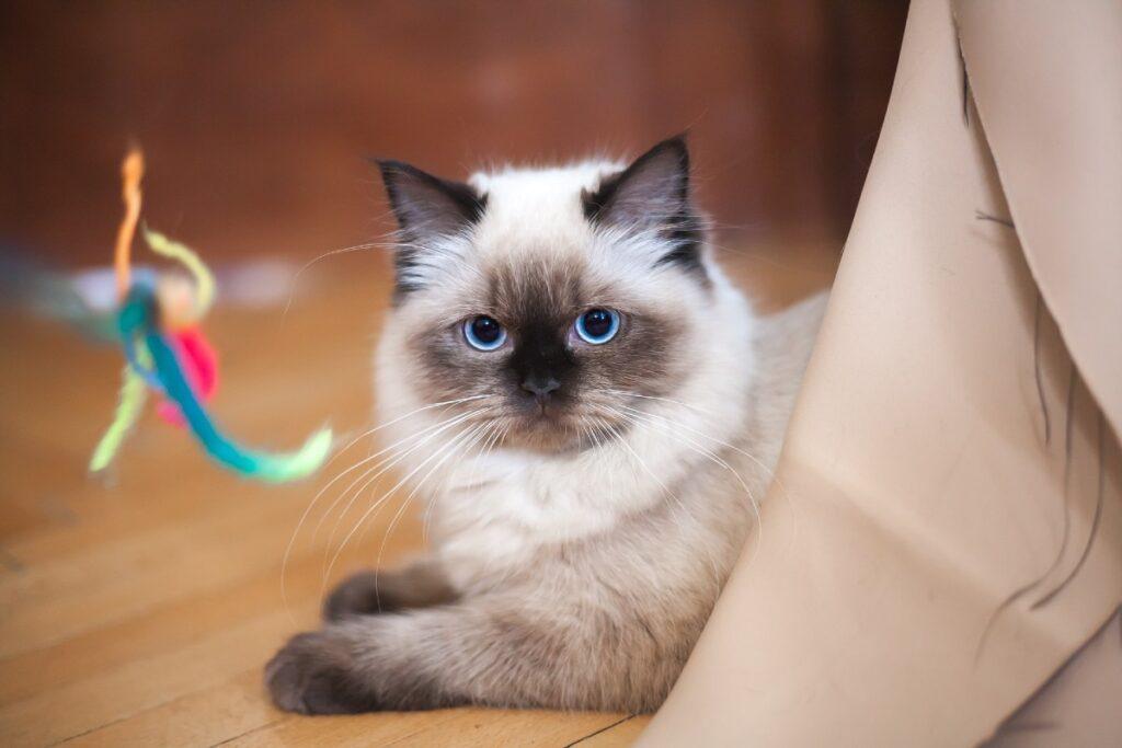 gattino e gioco