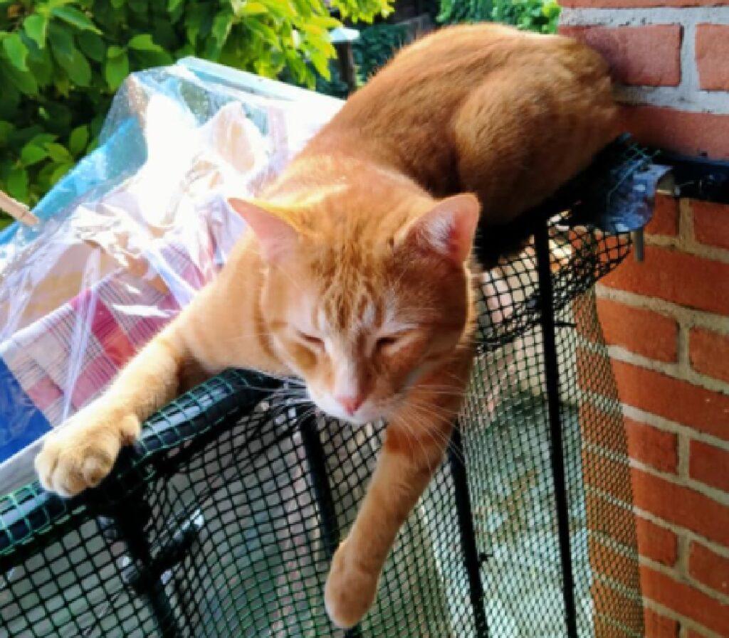 gatto sopra rete verde