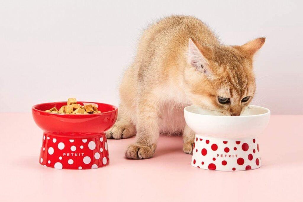 gatto arancione che mangia la pappa