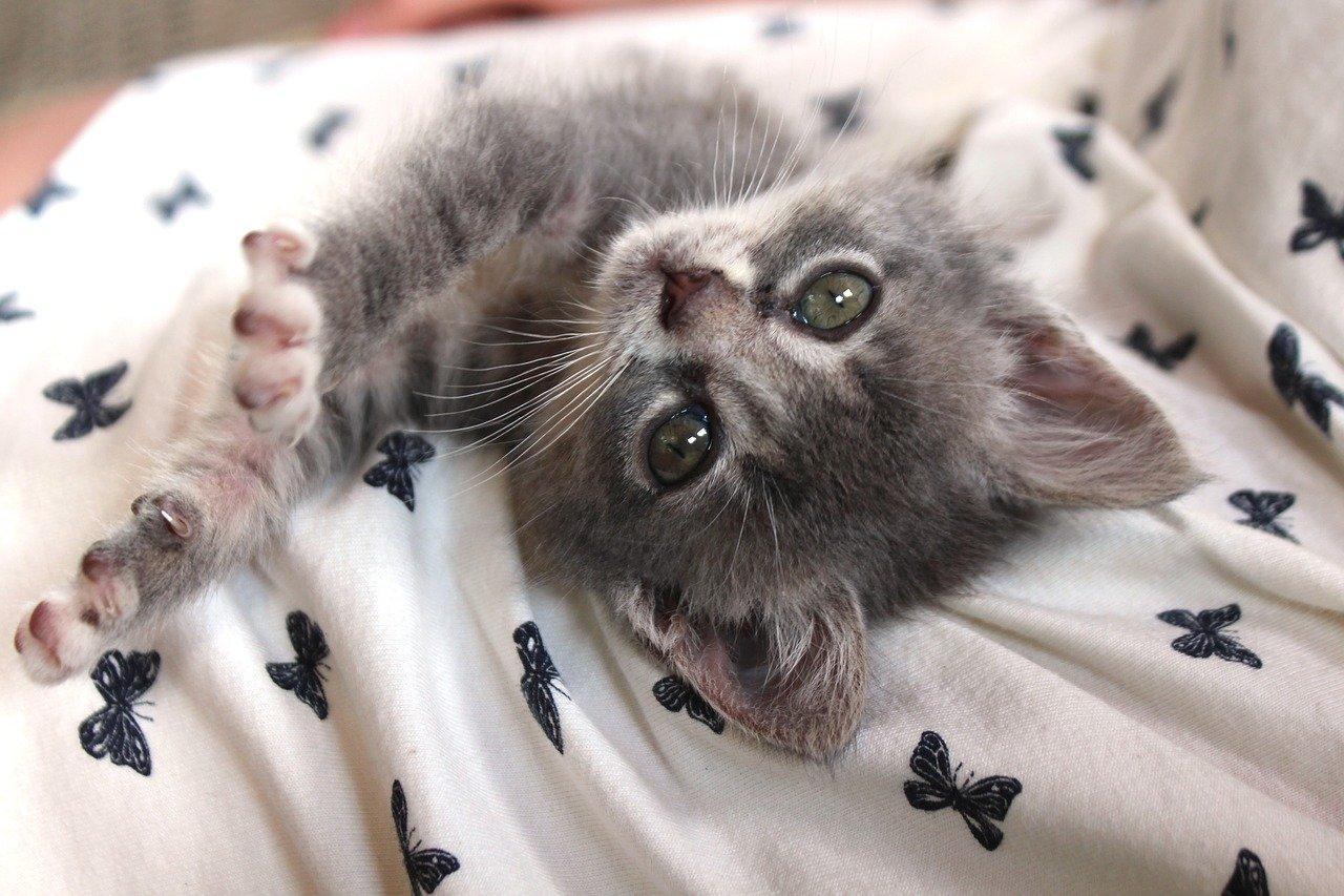 gattino vuole coccole