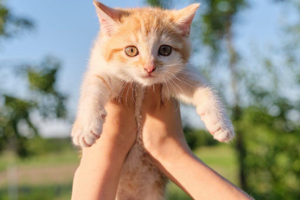 gatto sollevato