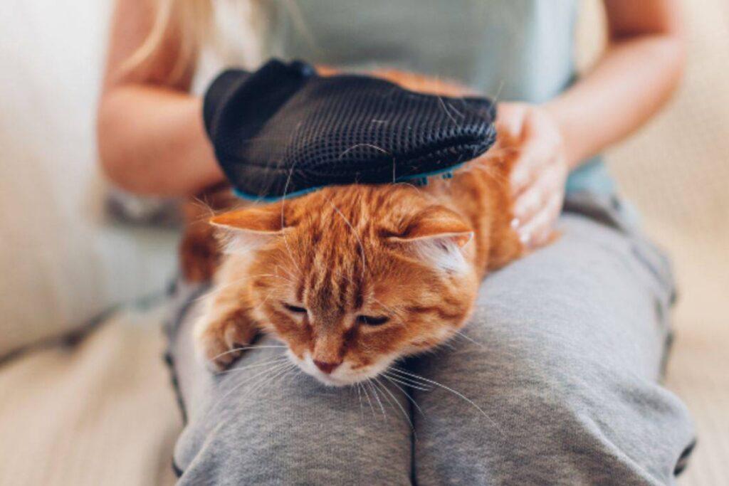 gatto sulle gambe