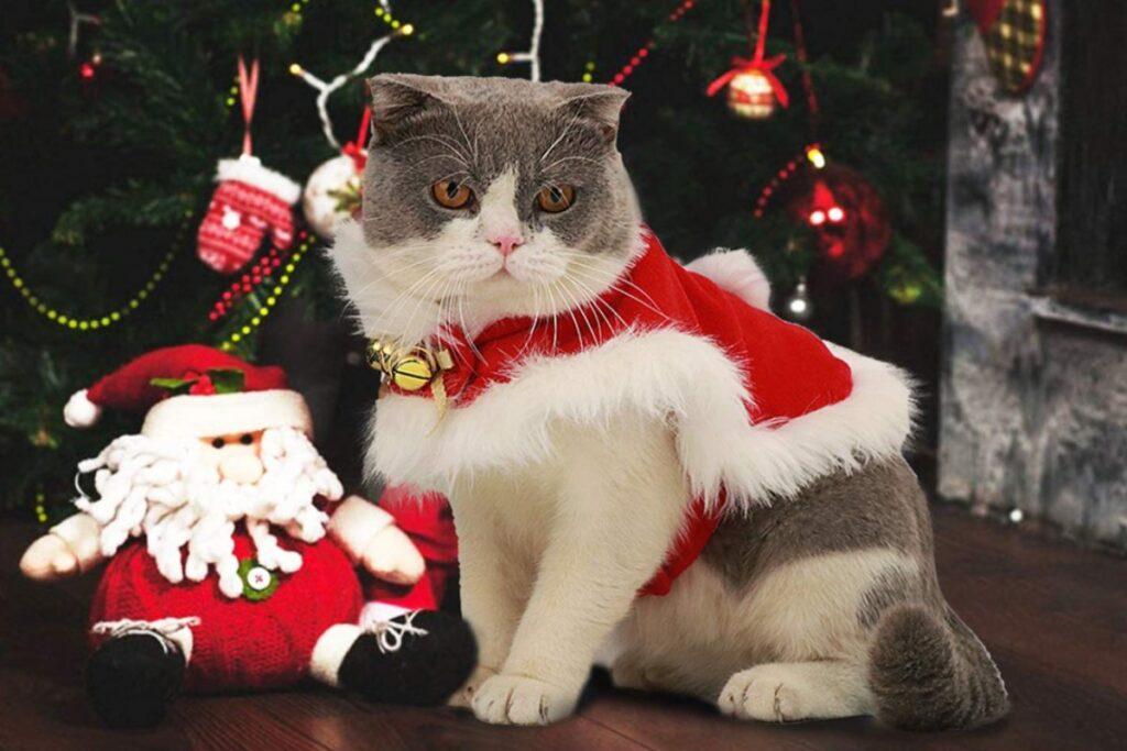 costume da babbo natale per il gatto
