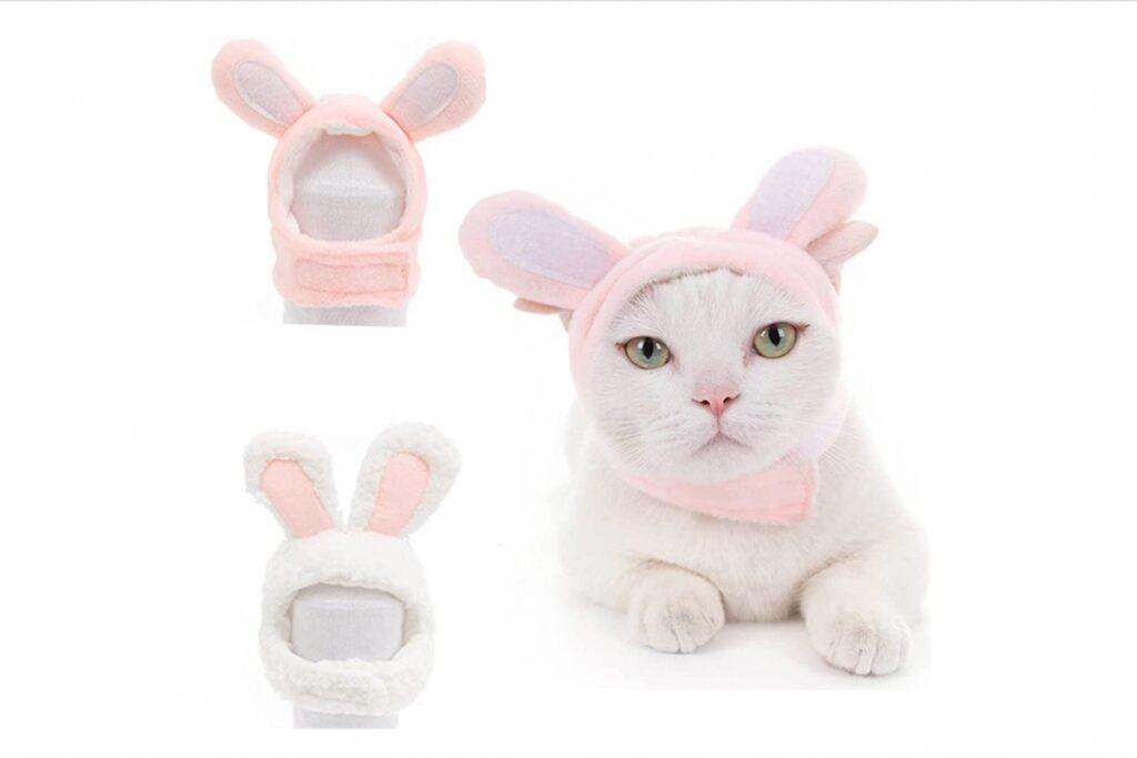 costume da coniglietto per il gatto